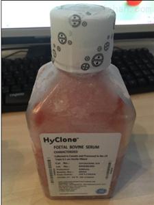 Hyclone鸡血清