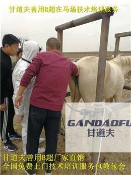 高清驴马用B超测孕仪新报价
