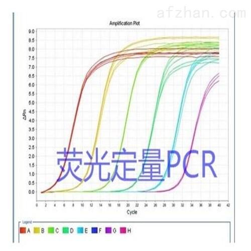 肺孢子虫通用探针法荧光定量PCR试剂盒厂家